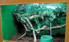 green tree python setup ultimate exotics