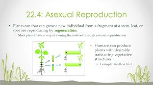 Asexual Reproduction Worksheets Unit 7 Plants Mrs Korsun Ppt Video Online Download