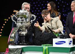 boxer dog crufts 2015 woman causes outrage at uk u0027s crufts dog show after picking up