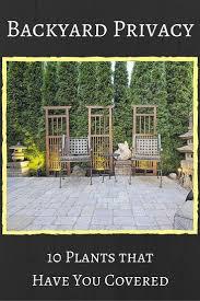 download best privacy screen solidaria garden
