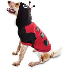 dog costumes spirit halloween dog costumes funny costumes for dogs u0026 puppies petco