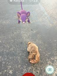 Tired Dog Meme - pokémon go has gone to the dogs