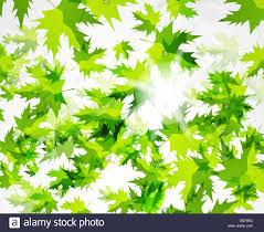green leaves pattern spring design template stock vector art