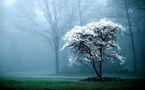 white tree fog mist forest hd wallpapers lovely desktop background