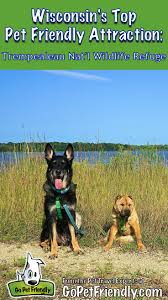 Wisconsin traveling with pets images 501 best pet friendly destinations images atlanta jpg