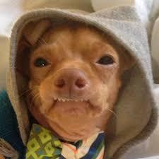 Dog Teeth Meme - dog teeth blank template imgflip