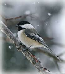 watercolor tutorial chickadee 60 best watercolor pencil images on pinterest water colors