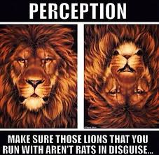 Fake Friend Meme - fake friend friends lion loyal loyalty quote rats image