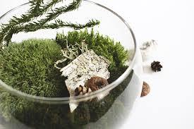 diy found moss terrarium idle hands awake