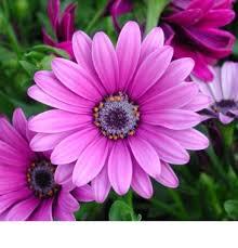 flowers uk going burnley florists send flowers online or 01282 429638