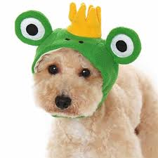 frog halloween costume prince frog dog hat by dogo with same day shipping baxterboo
