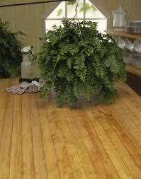 How To Arrange Indoor Plants by Best 10 Outdoor Potted Plants Ideas On Pinterest Potted Plants