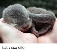 Sea Otter Meme - baby sea otter meme on me me