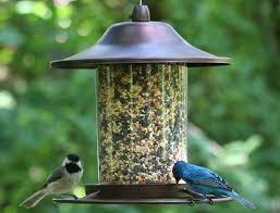 best bird feeder in february 2018 bird feeder reviews