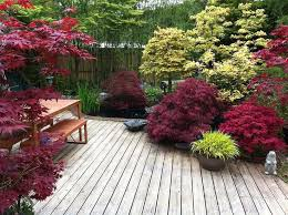 Good Backyard Trees by Best 10 Small Japanese Garden Ideas On Pinterest Japanese