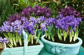 Flowers For Backyard by 50 Best Types Of Flowers U2013 Pretty Pictures Of Garden Flowers