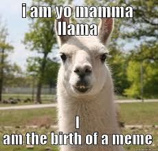 Llama Meme - the first yo mama llama