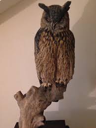 martyn bednarczuk bird carvings