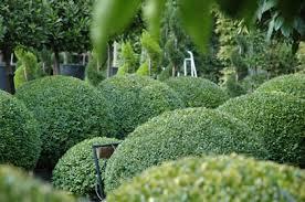 English Box Topiary - topiary balls u0026 topiary domes u2014 crown topiary