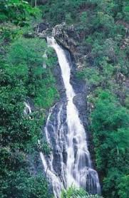 Gardeners Falls Maleny - kondalilla national park about kondalilla department of