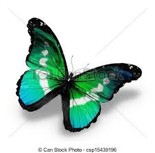 Blue And Green Butterfly - stock illustration of morpho blue green butterfly isolated on