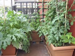 balcony vegetable garden boundless table ideas