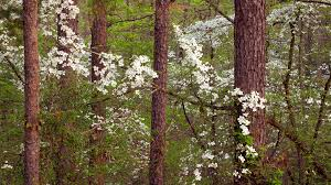 Mississippi forest images Mississippi pictures and facts png