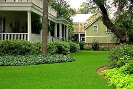 palmetto st augustine sod solutions