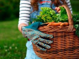 21 easiest veggies u0026 herbs to grow prevention