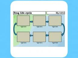 life cycle of a frog worksheet for primary children busy