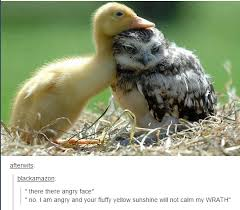 Funny Duck Meme - owls on tumblr angry face animal and humor
