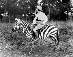 riding zebras looked boss but was not chill at all