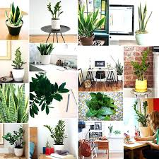 small office plants low light office plants no sunlight tall