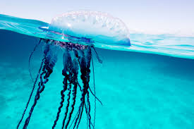 the critter that u0027s mushy as a jellyfish and long as a whale wired