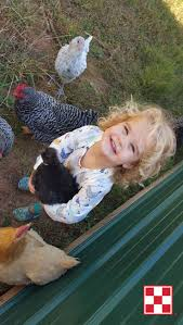 172 best kids u0026 chickens images on pinterest backyard chickens