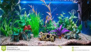 fish tank 39 rare aquarium fish tank photos design dream aquarium