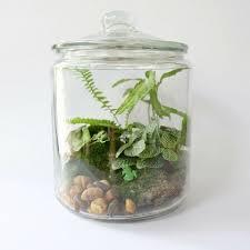 diy terrarium my garden life
