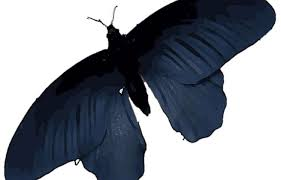 butterfly wings offer a model for better solar cells