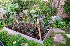 growing fruit on my urban southern california mini farm lou