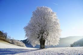 snowy tree winter 8k uhd wallpaper wallpapers gg