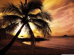 tropical sunset 4k hd desktop wallpaper for 4k ultra hd