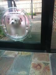 installing pet door in glass door dog doors melbourne installation extra large size patio pet door