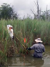 non native invasive plants smithsonian scientists work to stop invasions smithsonian insider