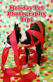 11 best puppy love images on pinterest holiday cards