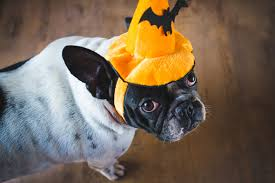 5 halloween games to make your pup u0027s party the most spooktacular