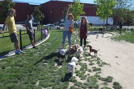 west end dog friendly may 2013 west end neighborhood and