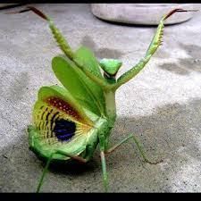 the praying mantis and the wings a journey in faith