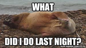 Walrus Meme - karen woodside ny s review of where s walrus