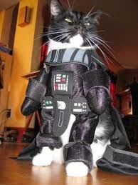 Funny Halloween Costumes Cats 23 Adorable Cats Halloween Costumes Entertainmenttell