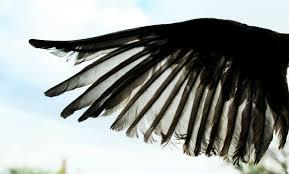 Bird Wing - open bird wing by dawnallynnstock on deviantart